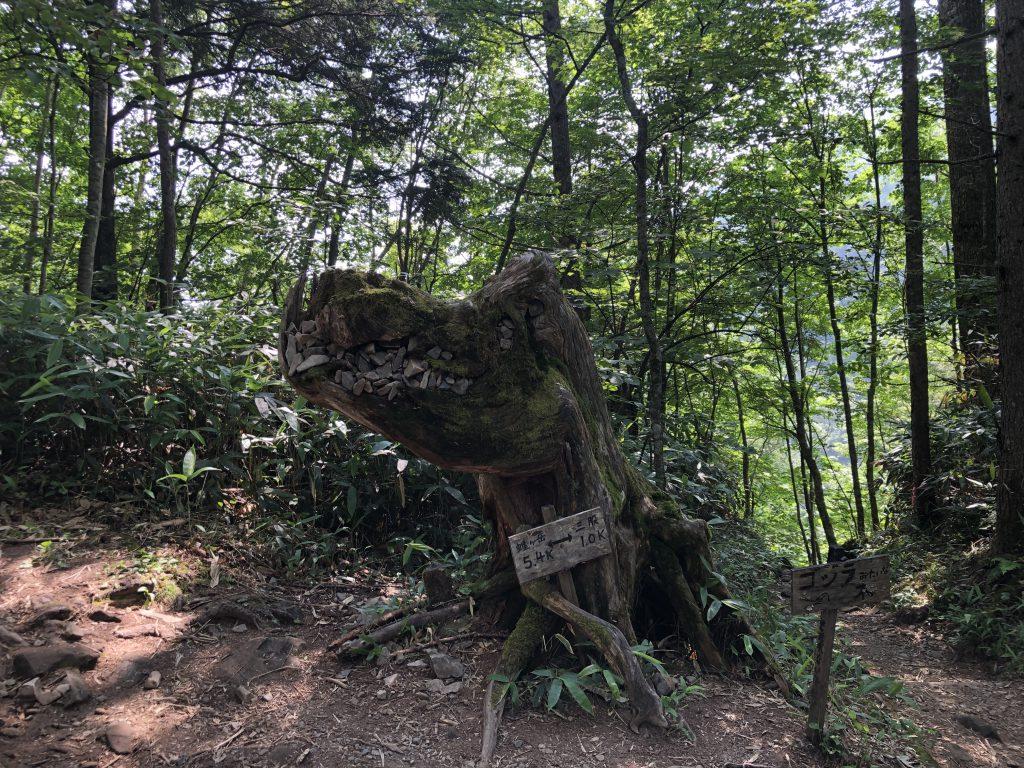 蝶ヶ岳 ゴジラみたいな木