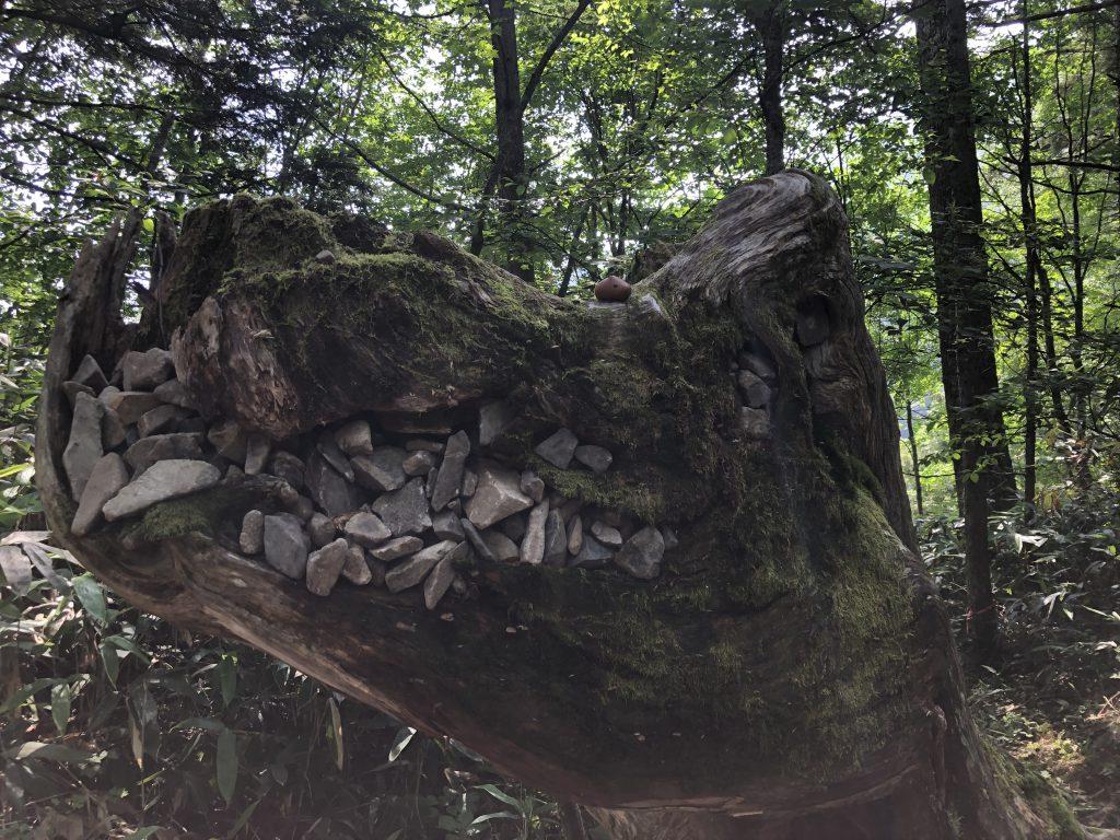 蝶ヶ岳 ゴジラみたいな木 カピバラさん