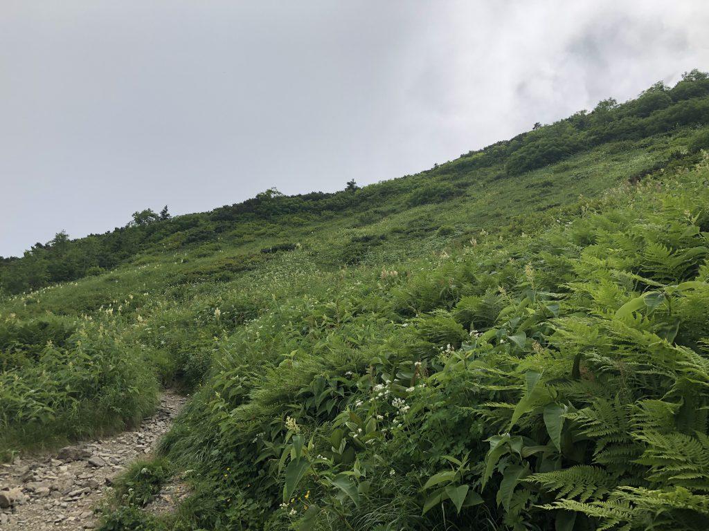 蝶ヶ岳 大滝山 分岐